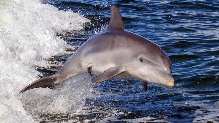 Fish-Tale Marina Dolphin Cruises