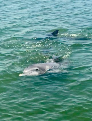 2 dolphins