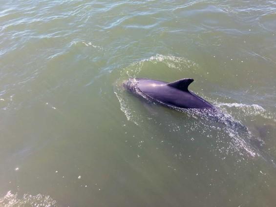 DolphinCruise