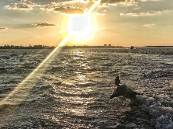 dolphin jumping in front of sunset ebe