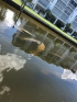 manatees next to ebe
