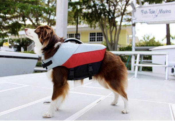 tipit in life jacket